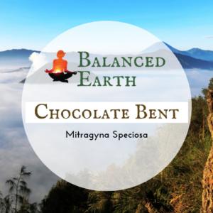 Chocolate Bentuangie