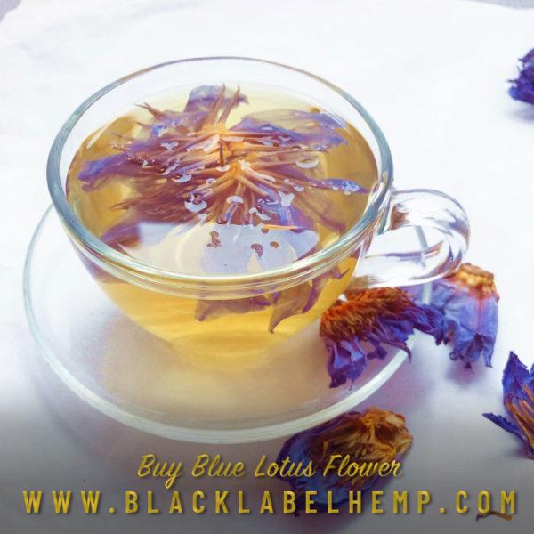 Blue Lotus Flower Bulk | Nymphaea Caerulea