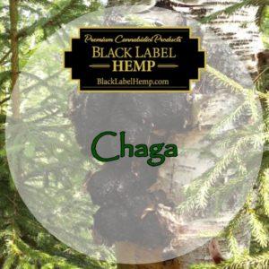 Natural Chaga Mushroom Extract