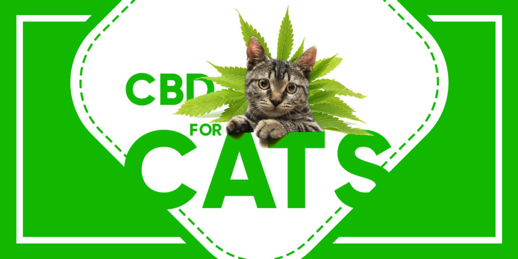 CBD Oil For Cats Will It  Help With Their Anxiety?