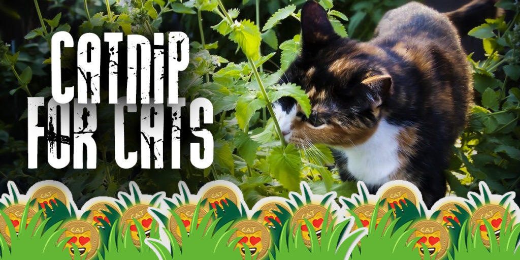 Catnip : Most Popular Usages Of Catnip