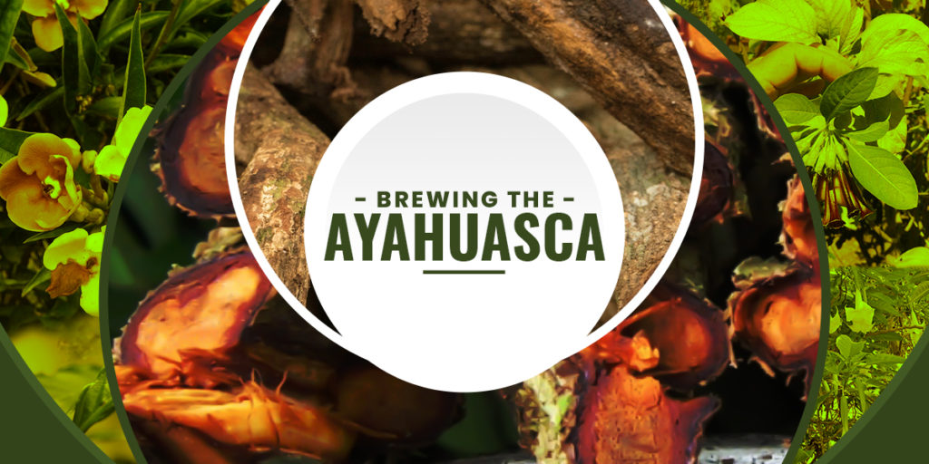 Learn How To Make Ayahuasca In 5 Minutes Hack