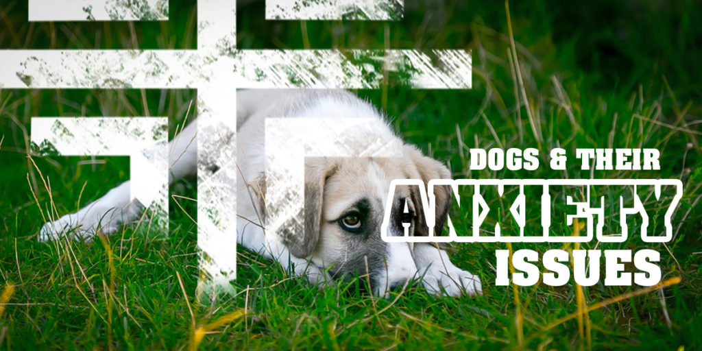 Dogs and their anxiety issues