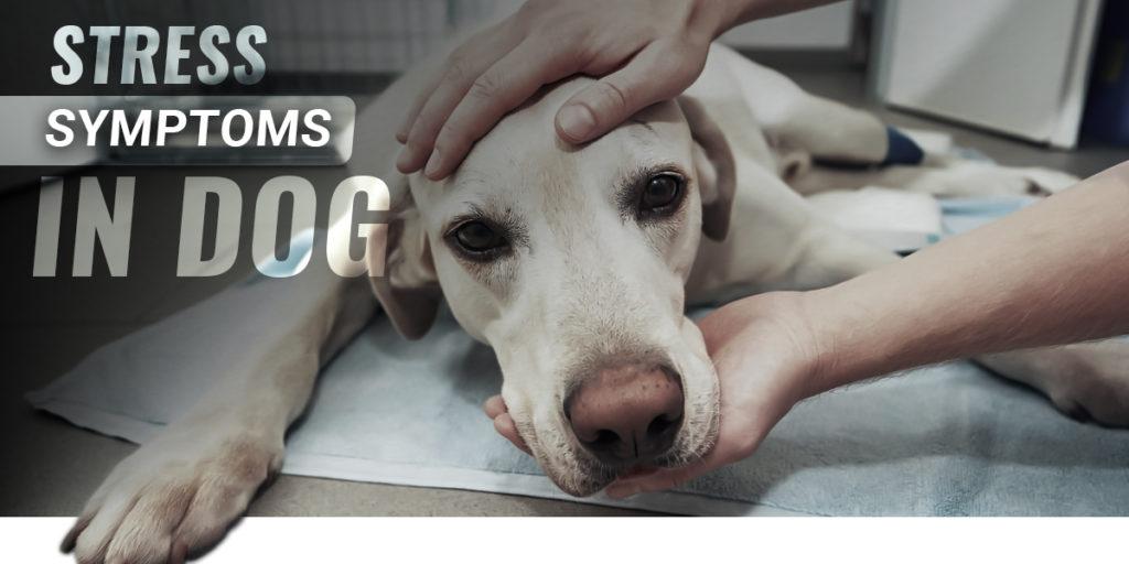 Stress Symptoms In Dog