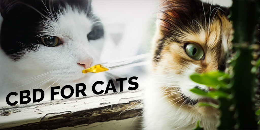 CBD for Cats