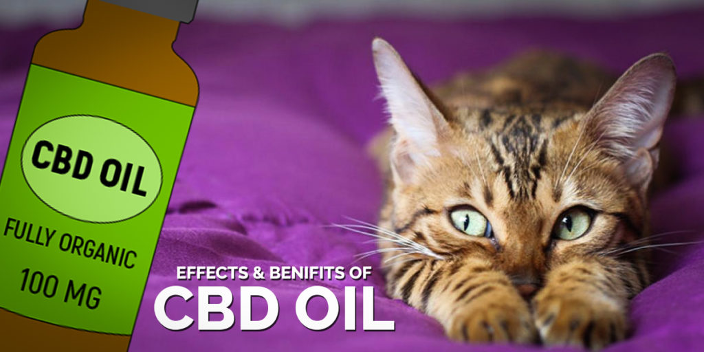 Effects and benifits of cbd for cats