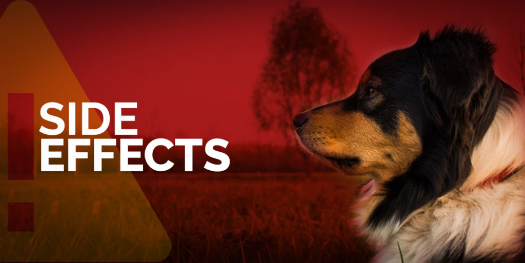 SIDE EFFECTS Of CBD for dogs