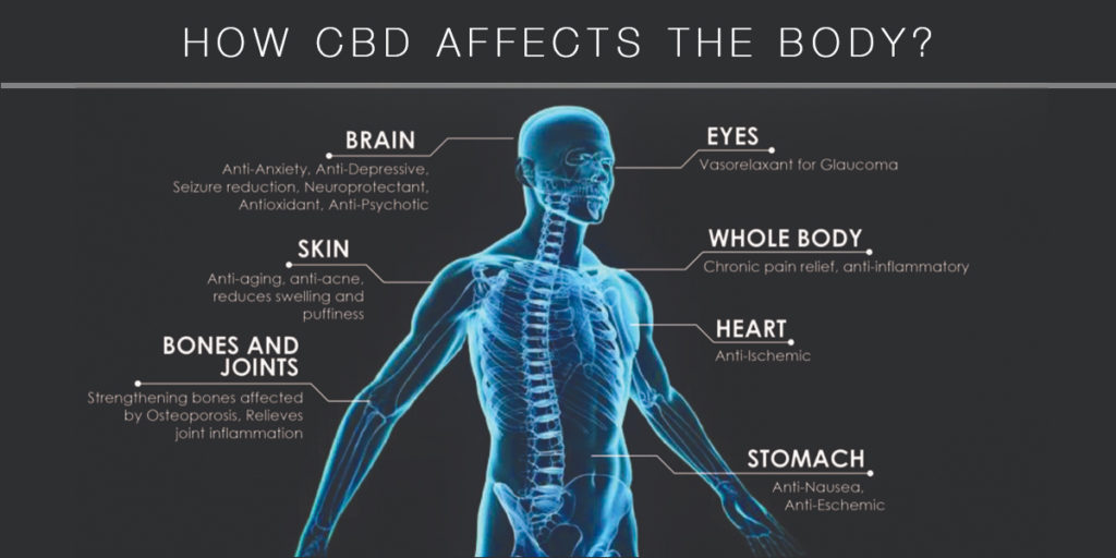 How CBD affects the body