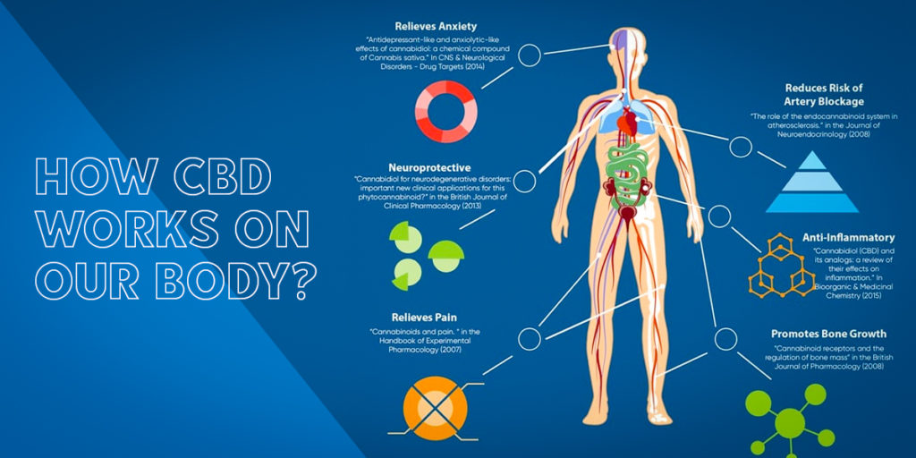 How CBD works on our body