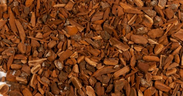Quina Roja | Red Cinchona Bark | Quinine 50g