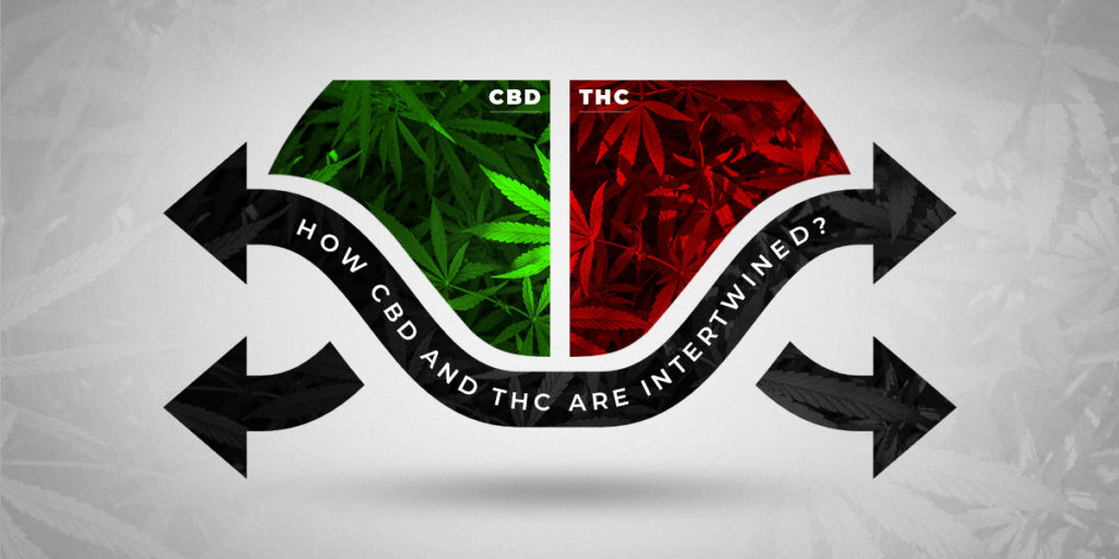 How CBD and THC are intertwined