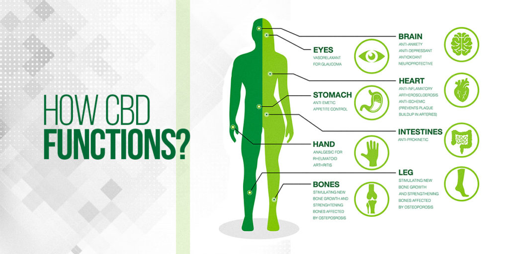 How CBD functions