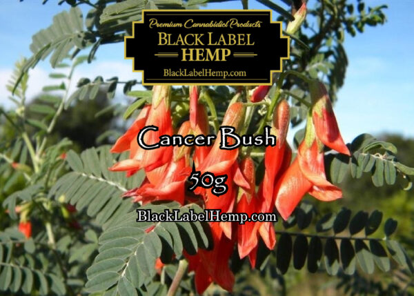 Cancer Bush | Sutherlandia Frutescens